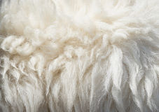 Sheep wool background Stock Images