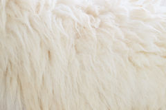 Sheep wool Stock Photos