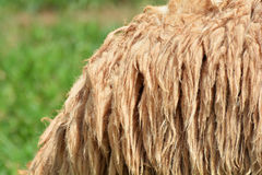Sheep wool Stock Photography