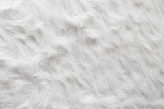 Sheep wool fur background texture wallpaper. Royalty Free Stock Photography