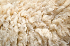 Sheep wool skin Royalty Free Stock Photo