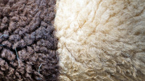 Sheep wool texture Royalty Free Stock Photos