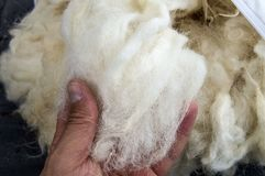 Sheep wool, wool pictures, make quilts and pillows with natural wool,.  Royalty Free Stock Image