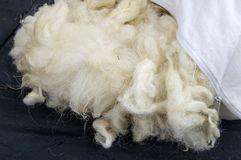 Sheep wool, wool pictures, make quilts and pillows with natural wool,.  Royalty Free Stock Photography