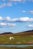 sheep in WulanBu all grassland ancient battlefield stock photography