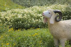 Sheep in yellow and white flowers Royalty Free Stock Photos