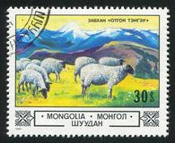 Sheep in Zavhan Highlands royalty free stock image