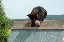sheepdog Стоковые Изображения