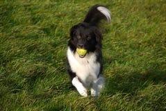 sheepdog photos libres de droits