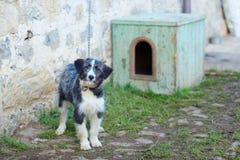 Sheepdog Bergamasco tied royalty free stock images