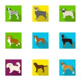 Sheepdog, dachshund, bernard, and other web icon in flat style.Spitz, boxer, beagle, icons in set collection. Royalty Free Stock Image