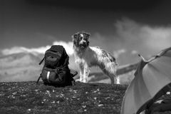 Sheepdog next to a backpack in the bush. Shepherd dog with a backpack on the top of a mountain in the Basque country Stock Images