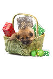 Sheepdog puppy in basket Royalty Free Stock Photography