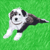 Sheepdog Puppy Lying in the Grass. A happy sheepdog puppy happily lying in the grass Royalty Free Stock Image