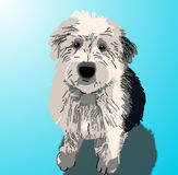 Sheepdog Puppy Sitting. A sheepdog puppy sitting on a blue background with a drop shadow Stock Image