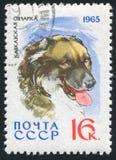 sheepdog royaltyfri bild