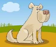 Sheepdog shaggy dog cartoon illustration Royalty Free Stock Images