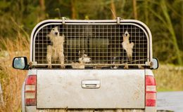 Sheep dogs, Lake District, Cumbria Stock Images