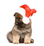 Sheepdogs puppy isolated over white background Stock Photography