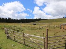 Sheepfold στο βουνό φιλμ μικρού μήκους