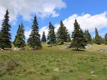 Sheepfold στο βουνό απόθεμα βίντεο