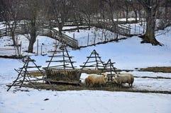 sheepfold fotografia stock