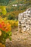 Sheepfold in de wijnstokken Stock Afbeeldingen