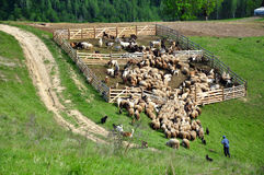 Sheepfold. Gathering in the mountains Stock Images