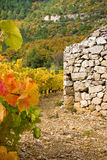 Sheepfold in the grapevines. In France Stock Images