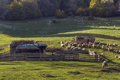 Sheepfold and grazing sheep flock Royalty Free Stock Photos