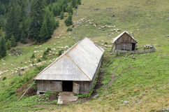 Sheepfold and sheep to pasture Royalty Free Stock Photo