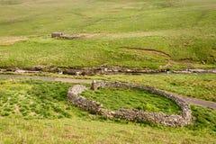 Sheepfolds i övreCoquetdale Arkivbilder