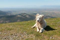 sheepherder fotografia stock