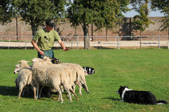 Sheepherder and dog Stock Photos