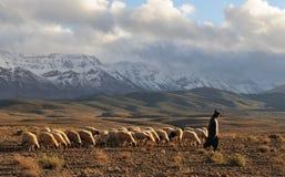 sheepherder för 2 moroccan Arkivbilder