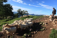 Sheepherder i cakle obraz stock