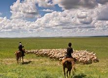 Sheepherder und Schafe Lizenzfreie Stockfotos