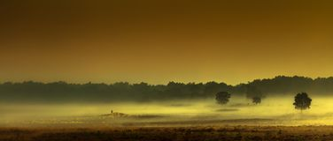 Sheepherder w ranek mgle obrazy royalty free