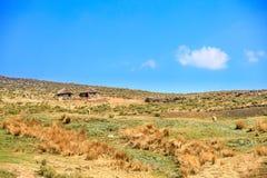 Sheepherder z stadem Obraz Stock