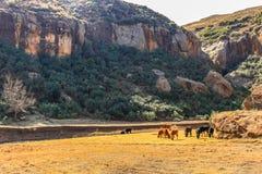 Sheepherder z stadem zdjęcie royalty free