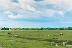 Sheeps και ουρανός Στοκ Εικόνες