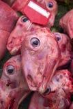 sheeps που ξεφλουδίζεται κεφάλι Στοκ Φωτογραφίες