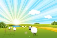 Sheeps Fotos de Stock Royalty Free