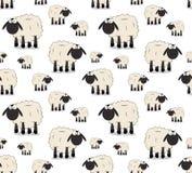 Sheeps Zdjęcia Royalty Free
