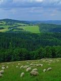 Sheeps Fotografie Stock