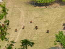 Sheeps backyard. Sheeps eating grass Stock Photo