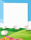 Sheeps Banner. Illustration of a banner with a view of sheeps in a farm Stock Image
