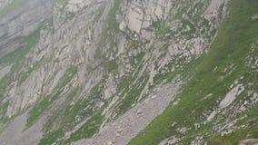 Sheeps in bergen Alpiene pieken landskape achtergrond Jungfrau, Bernese-hoogland Alpen, toerisme en avonturen wandeling stock videobeelden