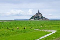Sheeps cerca del Saint Michel de Mont. Normandía, Francia Fotografía de archivo libre de regalías