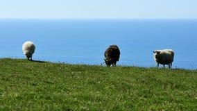 Sheeps chez l'Islande Photographie stock libre de droits